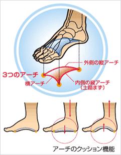 足の裏には、横のアーチと内側と外側に縦のアーチの合計3つのアーチがあります